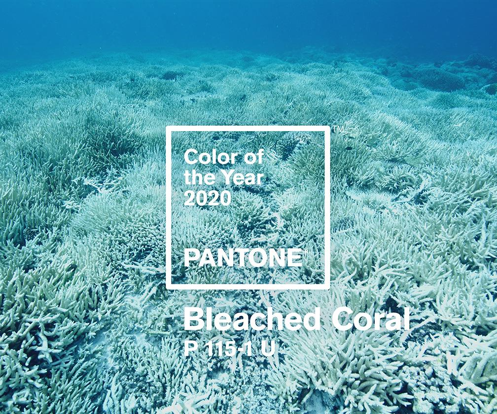 The Pantone Colour of the Year 2020 'will be Bleached Coral'