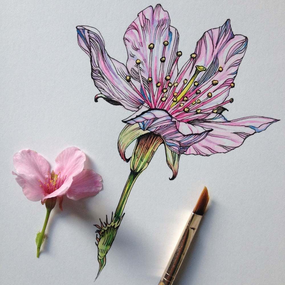 Scribble Drawing Artists : Tips for drawing flowers plants nature digital arts
