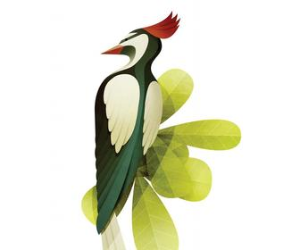 How to draw birds: 18 tips for both hand-drawn and vector illustration