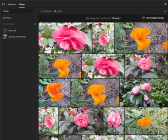 How to use Lightroom's new Search feature that uses AI to identify what's in your photos